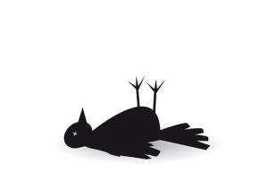 castleknock-henry-killed-a-bird