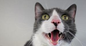 cat-victory-in-castleknock