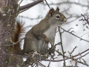 Squirrel at the Crazymad Writer's blog